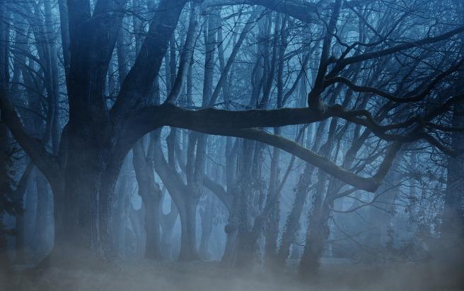 Forest Kiteratur Grusel schreiben